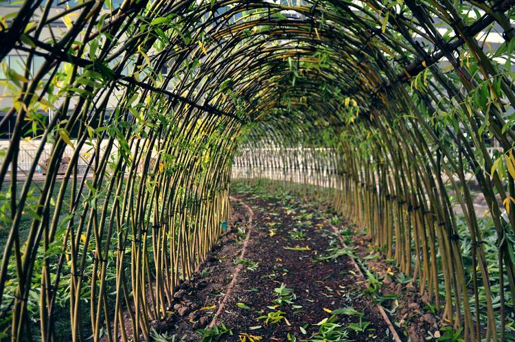 Zielona Kopuła Czyli żywe Struktury Zbudowane Z Wierzby